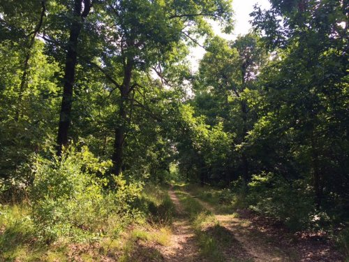 160 Acres +/- With Cabin : Lafe : Clay County : Arkansas