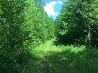 Oneida Lake Area Hunting Acreage
