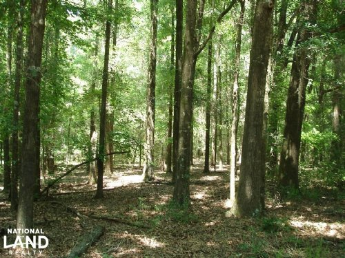 Pine Barren Creek Tract : Minter : Dallas County : Alabama