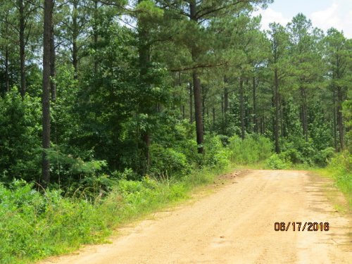 Valuable Timber & Great Hunting : Fayette : Alabama