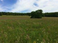 163 Ac Tillable Farmland - Pasture
