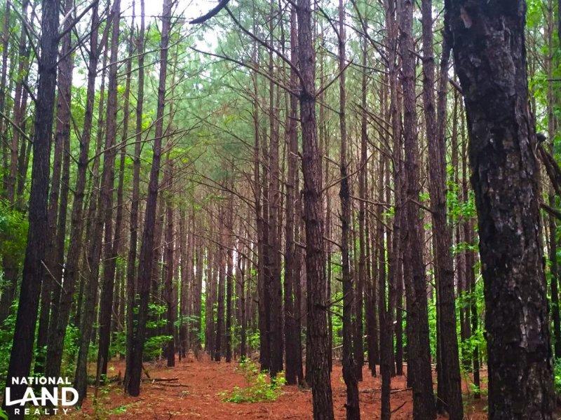 Bethune Large Acre Recreational Hom : Bethune : Kershaw County : South Carolina