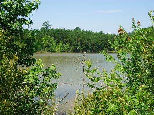 60 Ac - 2 Lakes, Timber, Wildlife : Dry Branch : Twiggs County : Georgia