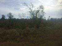 Hunting Land For Sale : Sturgis : Oktibbeha County : Mississippi