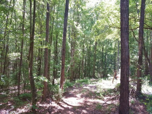 200 Acres Near Lake Martin : Camp Hill : Tallapoosa County : Alabama