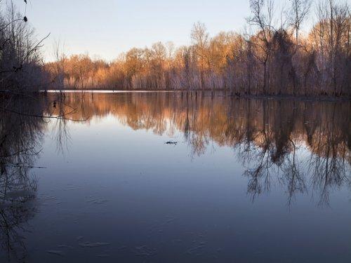 Extraordinary Waterfowl Property : Tuscaloosa : Alabama