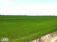 395 Acre Rice & Soybean Farm