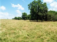 7/26/16 Auction: 192.46 Acres