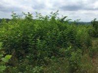 Ky Biomass 84.68
