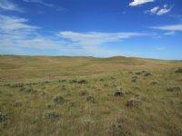 Westland Pasture
