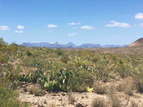 10 Acres Of High Desert : Terlingua : Brewster County : Texas