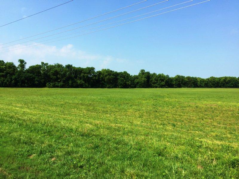 Mathews, Alabama - 22.7 +/- Acres : Mathews : Montgomery County : Alabama