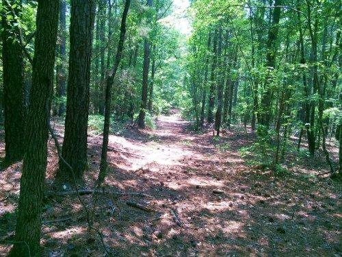 Flatwood Road Acerage : Hodges : Greenwood County : South Carolina