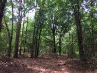 Tomlin Mill Creek Tract