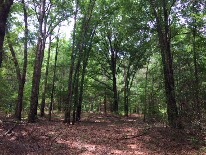 Tomlin Mill Creek Tract : Luverne : Crenshaw County : Alabama
