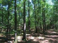 18 Acres All Hardwoods
