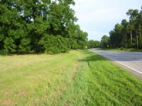 10 Acre Pecan Orchard