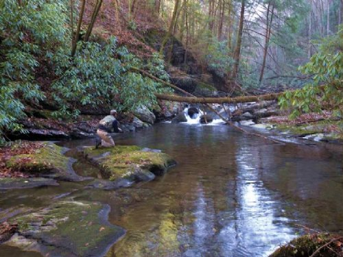Big Lost Creek : Ocoee : Polk County : Tennessee