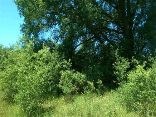22+ Acres (#30110) : Bogata : Red River County : Texas