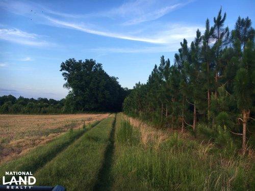 Dillon Longleaf Pine Tract : Nichols : Dillon County : South Carolina