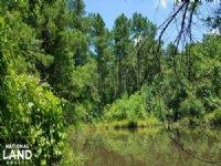 National Forest Recreational Proper