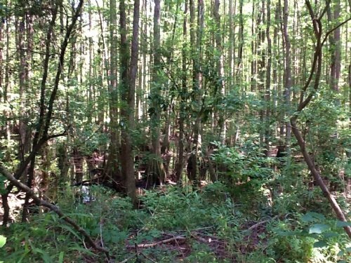 Beaver Pond Rd Tract : Luverne : Crenshaw County : Alabama