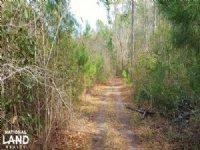 Possum Branch Hunting Land