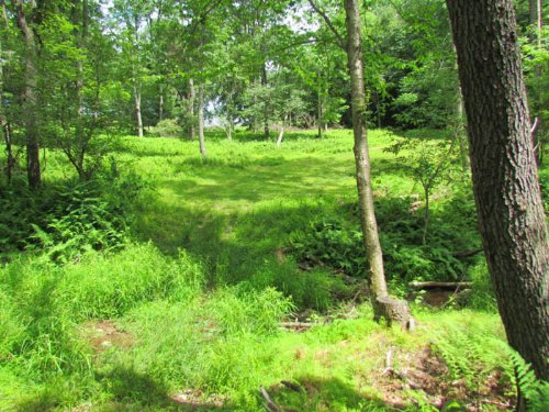 10+ Wooded Acres In Benton : Benton : Columbia County : Pennsylvania