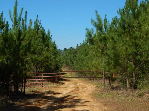 Hammond Road - 123590 : Prentiss : Jefferson Davis County : Mississippi
