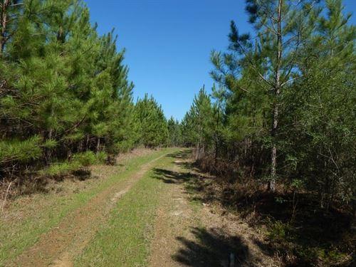 Hammond Road - 123588 : Prentiss : Jefferson Davis County : Mississippi
