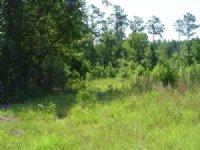 Merritt Tract : Walterboro : Colleton County : South Carolina