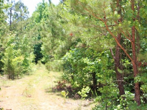 5.9 Acre Hickory Hill Ranch, Electr : Bath Springs : Decatur County : Tennessee