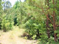 5.9 Acre Hickory Hill Ranch, Electr