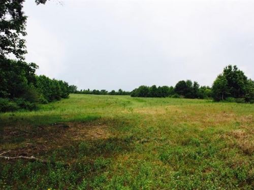 Pasture Land Planted Pines For Sale : Mendenhall : Simpson County : Mississippi