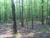 20 Acre Timberland & Deer Hunting