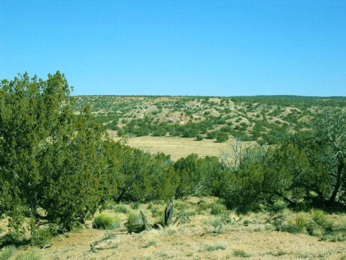 Secluded High Country Ranch : St. Johns : Apache County : Arizona