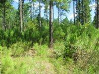 Tract 112 Millwood Plantation