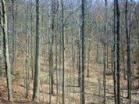 Shepard Hill Forest