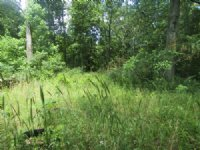Absolute 31 Acre Land Auction