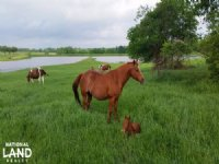 Moore Ranch - 6J Paint Horses : Huntsville : Walker County : Texas