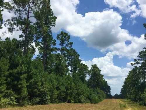 33 Acres Fm 1696 : Huntsville : Walker County : Texas