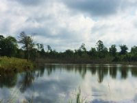 29 +/- Acres With 5 Acre Pond : Goshen : Pike County : Alabama