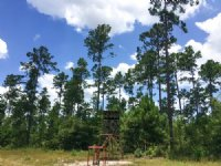 51 Acres Fm 1696 : Huntsville : Walker County : Texas