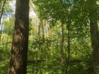 White Oak @ Poston Retreat