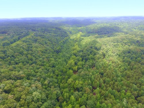 131 Acre Hunting Tract : Only : Hickman County : Tennessee