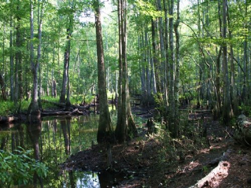 Little Ohoopee River Tract : Swainsboro : Emanuel County : Georgia