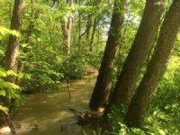 8.5 Wooded Acres On Public Hunting