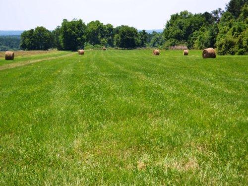 Peyton Property : N : Macon County : Alabama