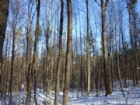 Stony Point Forest