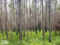 Shallotte Development & Timber Inve